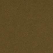 Kelp C1 | P1 | L1 | E1